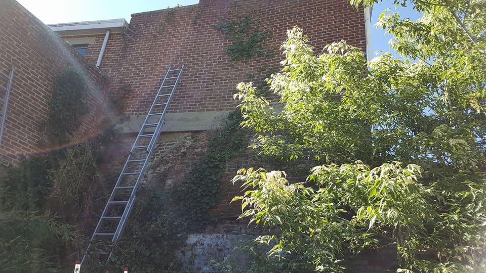 Entretien de plante grimpante agris parc et jardins for Entretien jardin 49